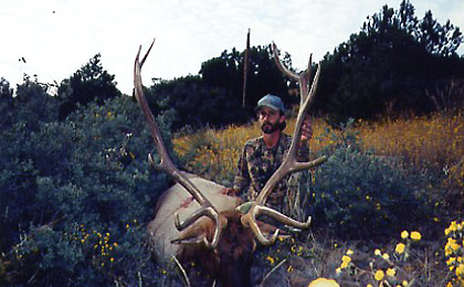 Guided Elk Hunts in New Mexico or Arizona